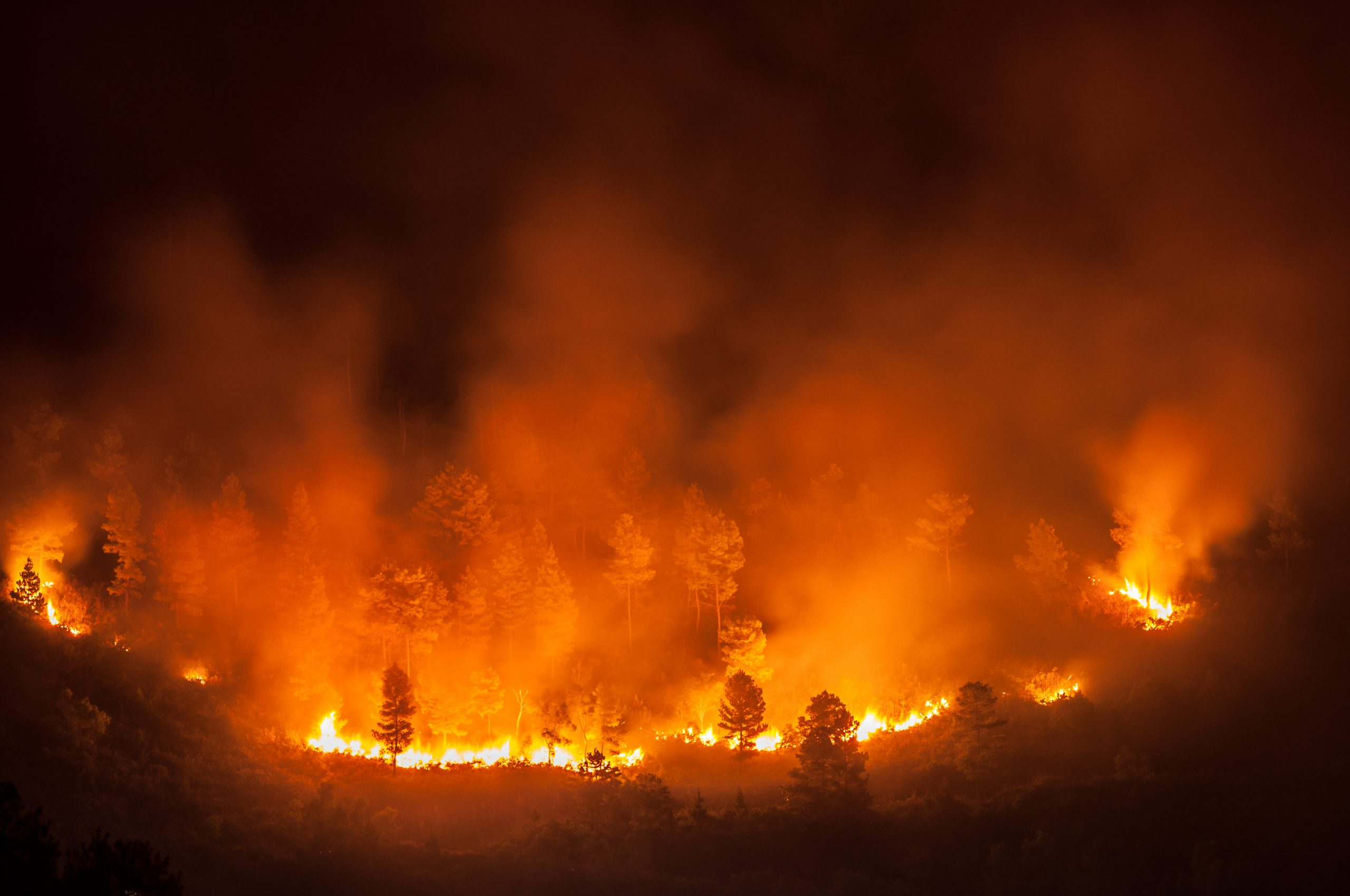 How COVID-19 will affect this year's wildfire season